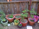my wee garden