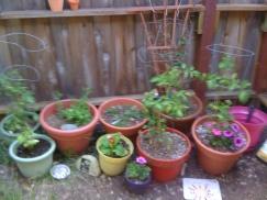 my own wee garden that i miss.