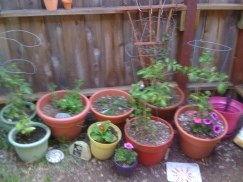 my own wee garden that i miss.
