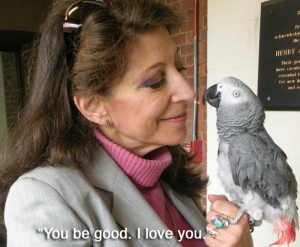 i hate birds. but this made me sob.
