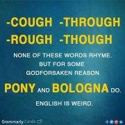 pony and bologna english