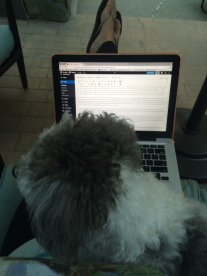 sorry for the lack of blogs lately, by the way. my laptop was out of comish and also laps are actually for puppies.