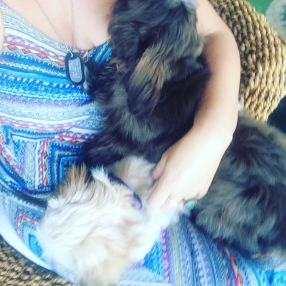 happiness is a lapful of puppies!